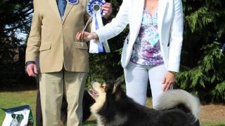 Elbereth Matkamies - Finnish Lapphund