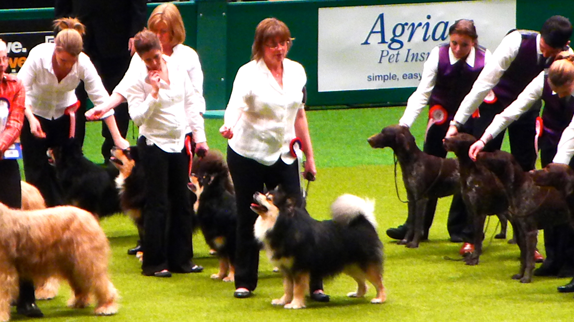 KC Breeder Stakes Final at Crufts